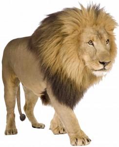 yle_lion2